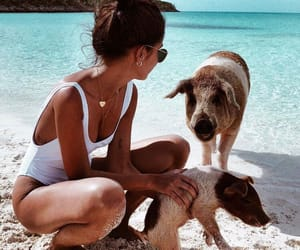 beach, girl, and pig image