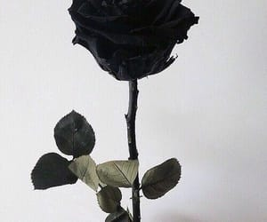 aesthetic, black aesthetics, and black rose image
