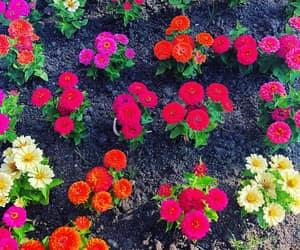 flower, instagram, and orianthi image