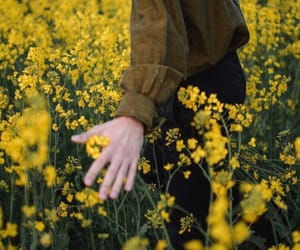 flowers, yellow, and hand image