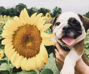 dog, flowers, and OMG image