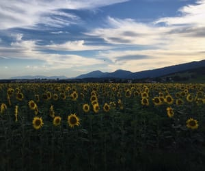 clouds, Sonne, and tournesol image