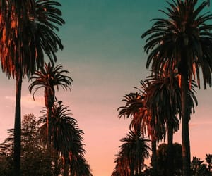 wallpaper, palm trees, and sunset image