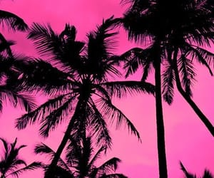 palm trees, pink, and beach image