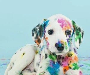 dog, colors, and pastel image