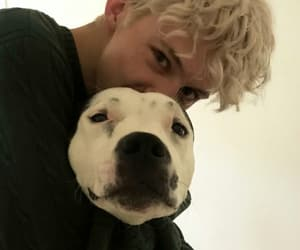 troye sivan and dog image