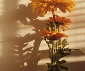 flower, shadow, and sunshine image