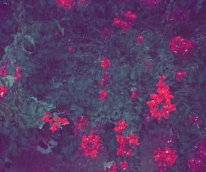 flowers, jordan, and pink image