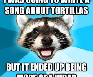 joke, tortillas, and racoon singing image