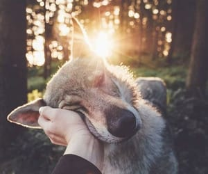 dog, forest, and photography image
