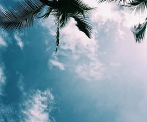 sky, palm trees, and blue image