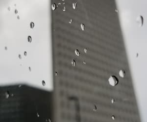 black and white, grey, and raindrops image