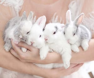 animals, bunny, and bunnies image