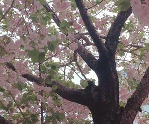 sakura, japan, and pink image