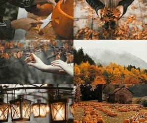 autumn, leaves, and rainy image