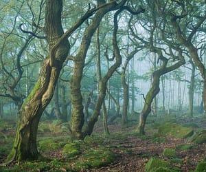 autumn, derbyshire, and mist image