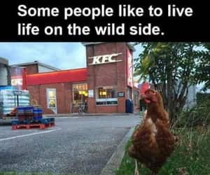 joke, wild side, and chicken joke image