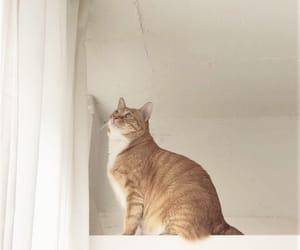 animal, fluffy, and kitten image