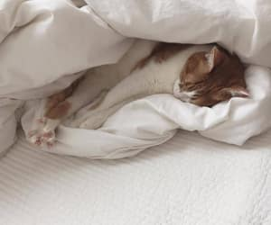 animal, white sheets, and bed sheets image