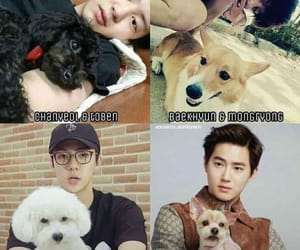 animals, kpop, and sehun image