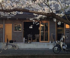 japan, cherry blossoms, and flowers image