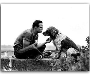 Марлон Брандо image