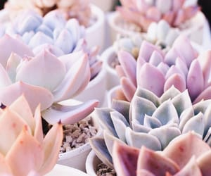 pastel, pink, and succulents image
