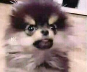 meme, taehyung, and bts image