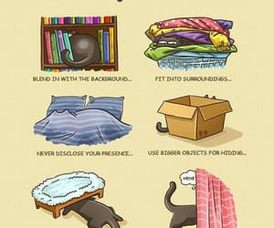 blankets, idiots, and pets image