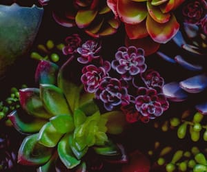 plants, green, and succulent image