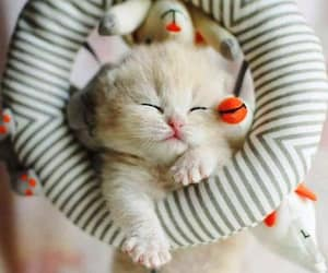 cats, kitten, and baby animals image