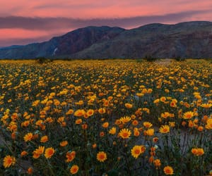 cloudy, flowers, and mountains image
