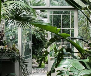 botanical garden, green, and trees image