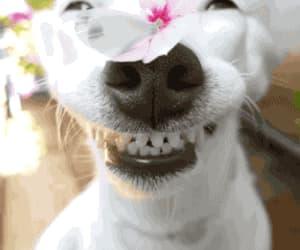 art, humor, and teeth image