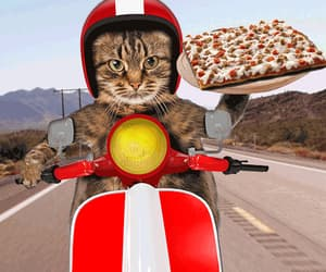 art, cats, and fastfood image