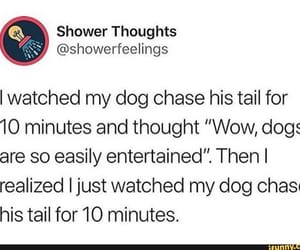 dog and thoughts image