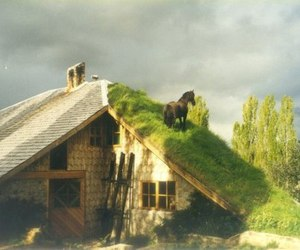 roof, horse, and house image