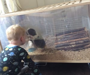 brother, guinea pig, and cute image