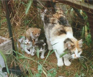 cats, country life, and kittens image