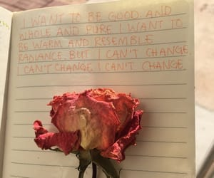 flowers, quotes, and rose image