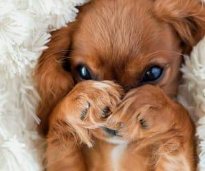 big eyes, puppy, and baby dog image