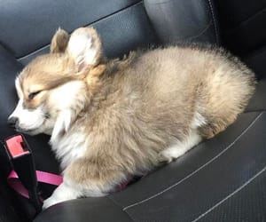 corgi, Dream, and kawaii image