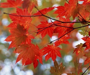 article, autumn, and leaves image