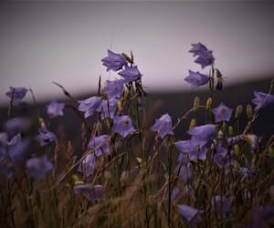 flower, me, and purple image