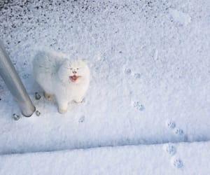 amazing, cute, and animal image