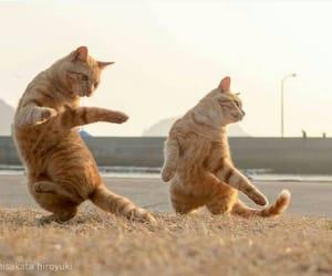 cats, kung fu, and martial art image