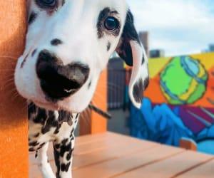 doggo and dogggg image