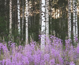 finland, flower, and forest image