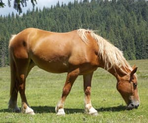 animals, trees, and horses image