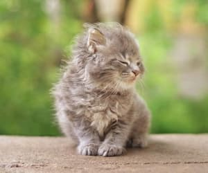 animals, kittens, and cute image